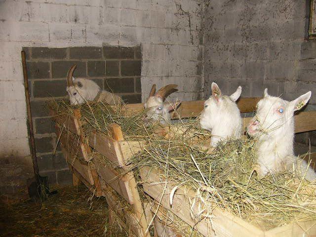 Кормушки с сеном для коз