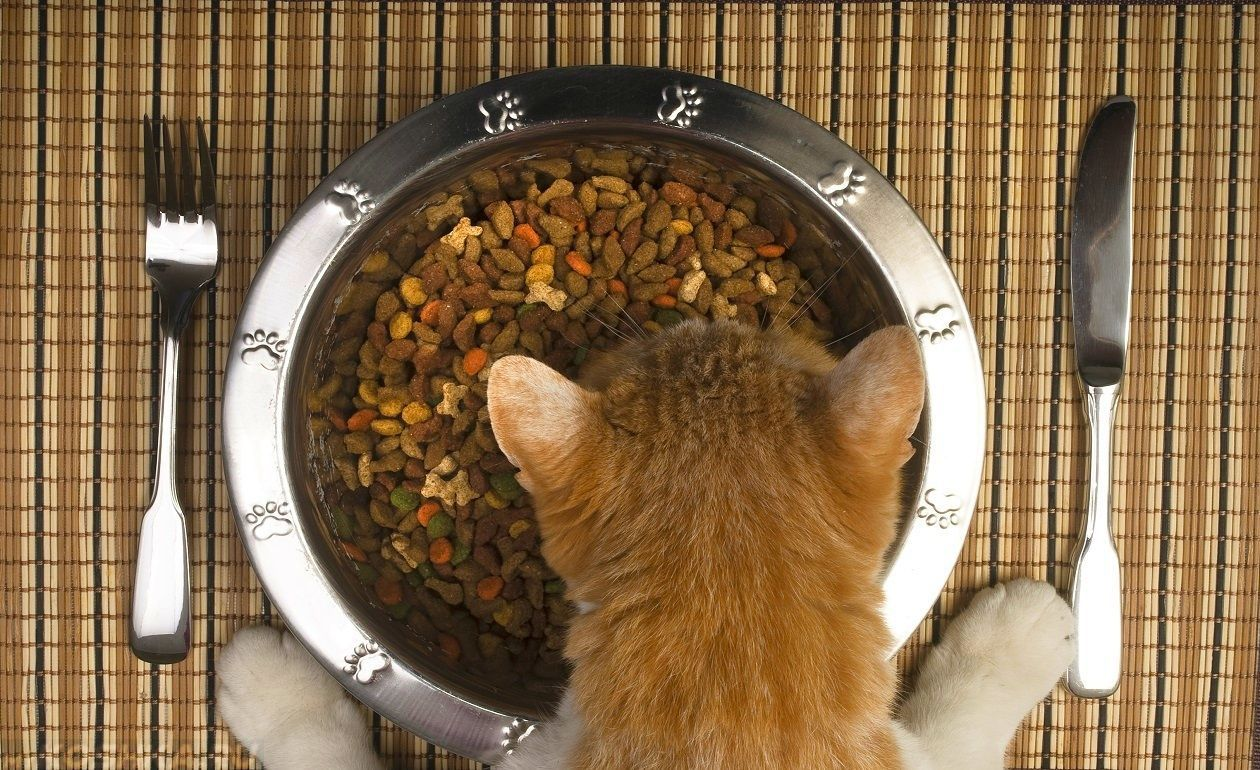 Корм Холистик - оптимальный выбор для кормления домашних животных