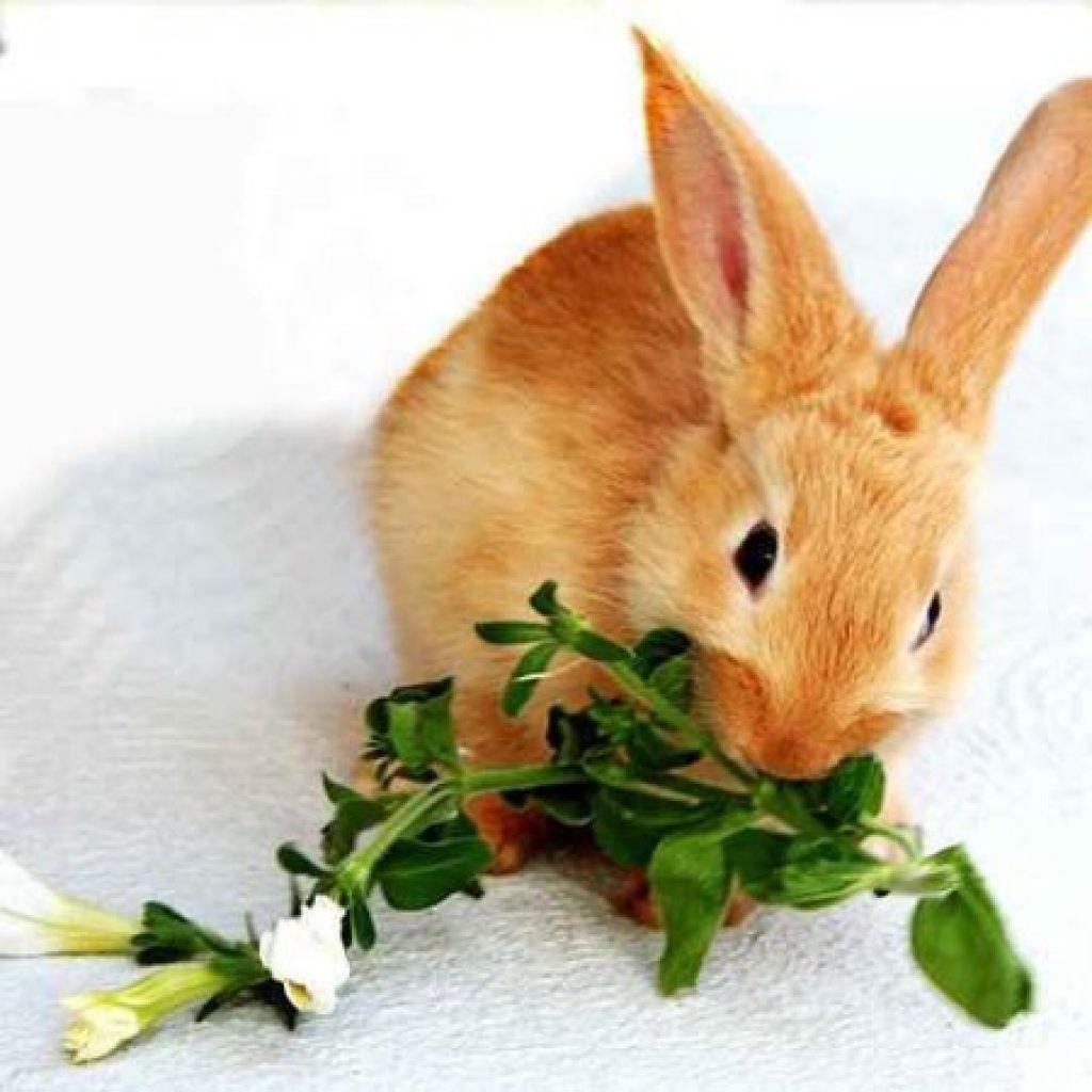 Кроликам необходимо обеспечить разнообразный рацион