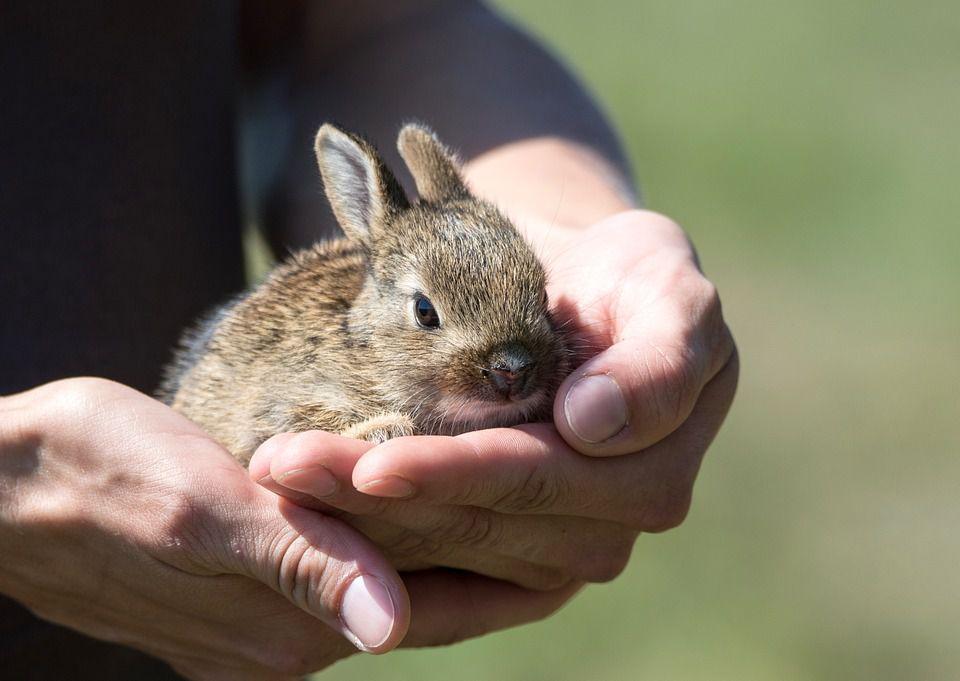 Кролик растет здоровым и упитанным