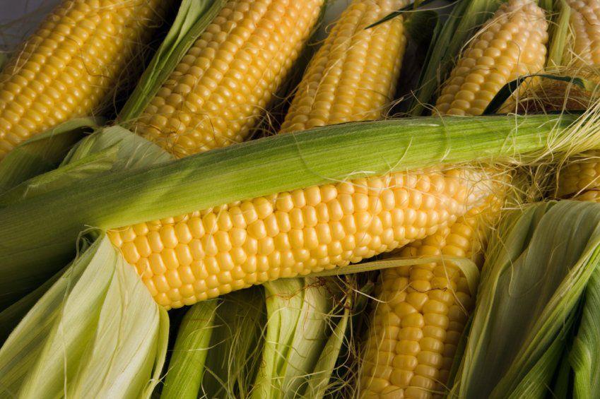 Кукуруза может использоваться в качестве замены овса
