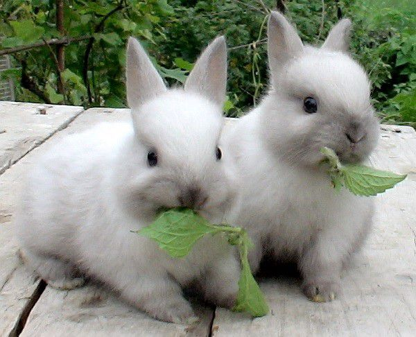 К декоративным кроликам требуется особый подход
