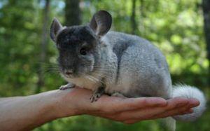 К размножению допускаются здоровые, крупные половозрелые особи