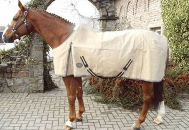 Левадная попона обеспечивает лошади сухость
