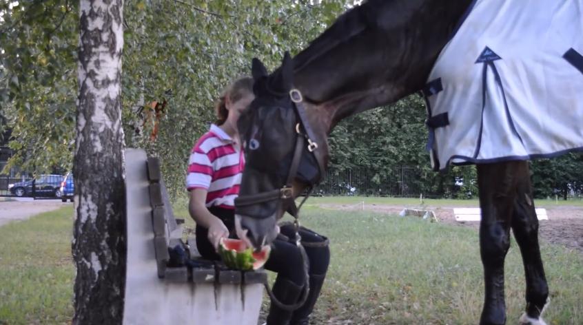 Лошади любят сочные арбузы