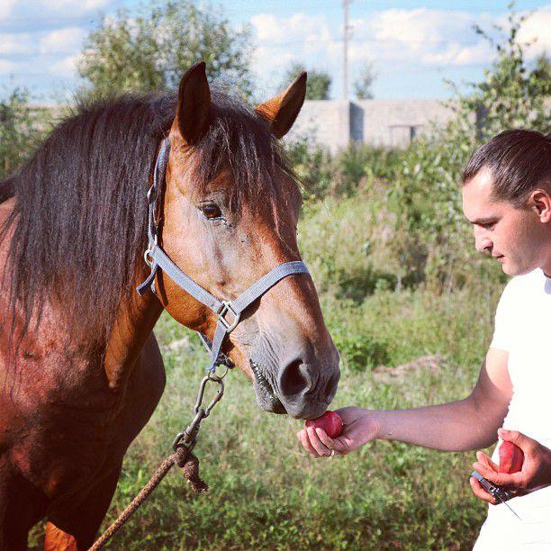 Лошади любят фрукты и могут ими злоупотреблять