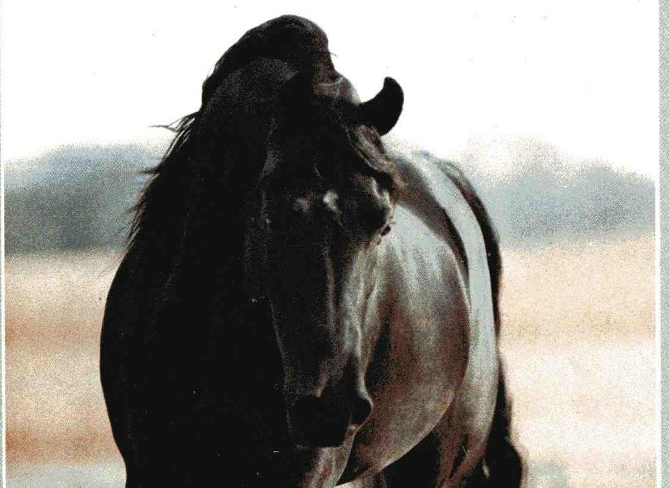 Лошадь Дахман