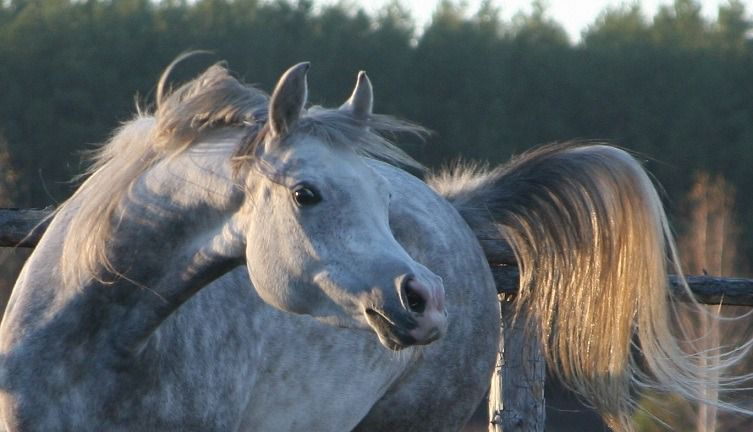 Лошадь Сиглави