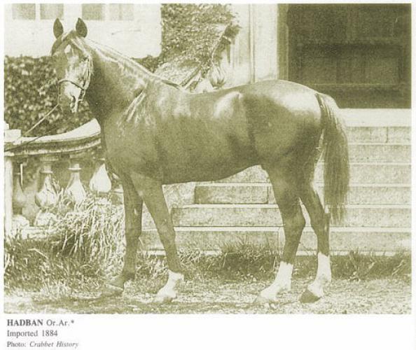 Лошадь Хадбан