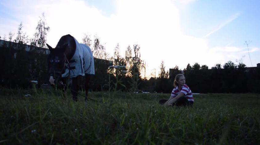 Лошадь на выпасе
