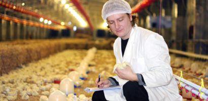 Медикаменты имеют важное значение в выращивании цыплят