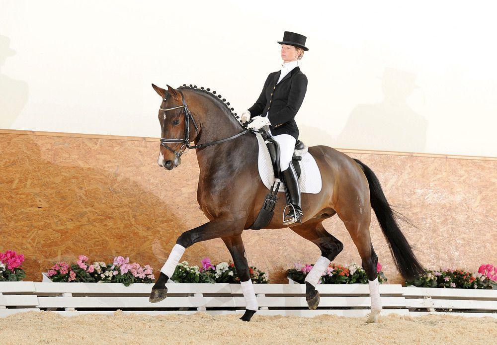 Наездница на Ганноверской лошади
