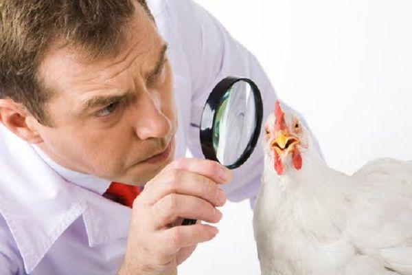 Нужно своевременно обращаться к ветеринарам