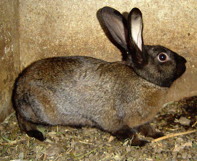 Нужно следить за поведением кролика