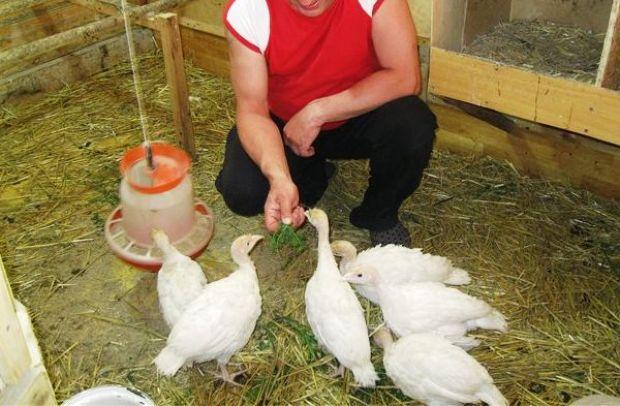 Обязательно кормить птиц зеленью