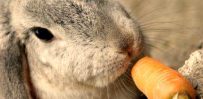 Овощи нужно хорошо мыть перед тем как давать их кроликам