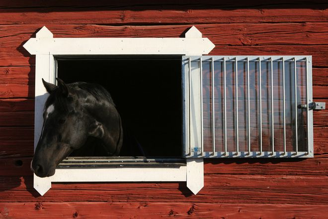 Окна в конюшне желательно делать двойными и с решетками