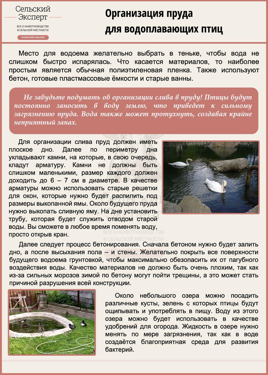Организация водоема для водоплавающих птиц