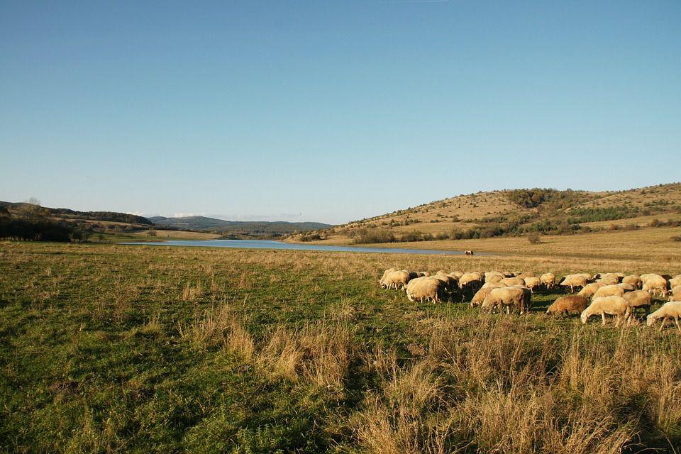 Пастбище для овец