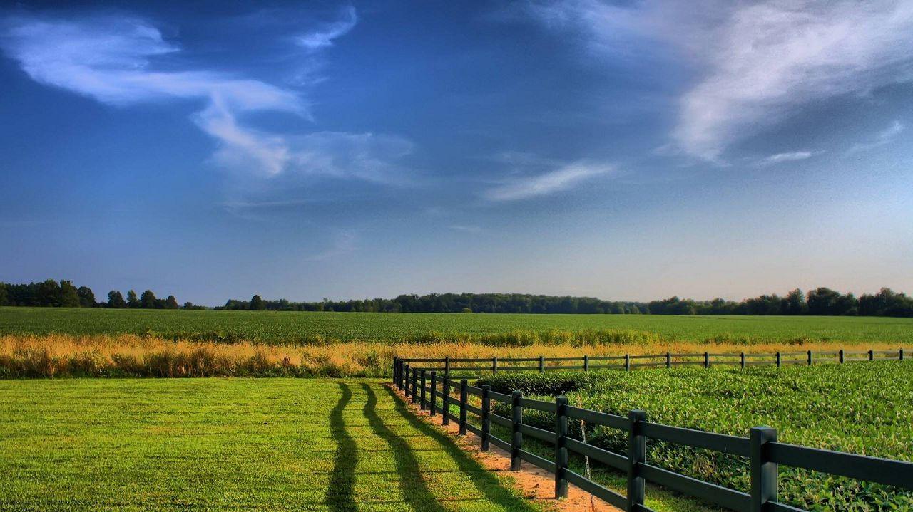 Пастбище — сельскохозяйственное угодье с травянистой растительностью