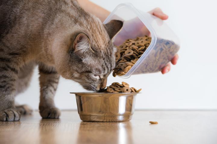 Переводить животное на сухой корм нужно постепенно