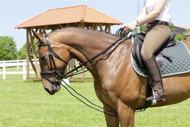 Поводья - главное средство управления лошадью