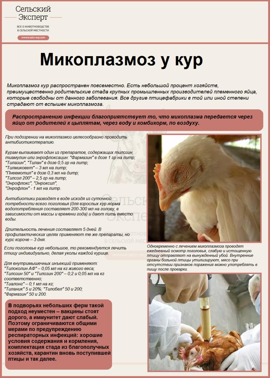 Микоплазмоз у кур
