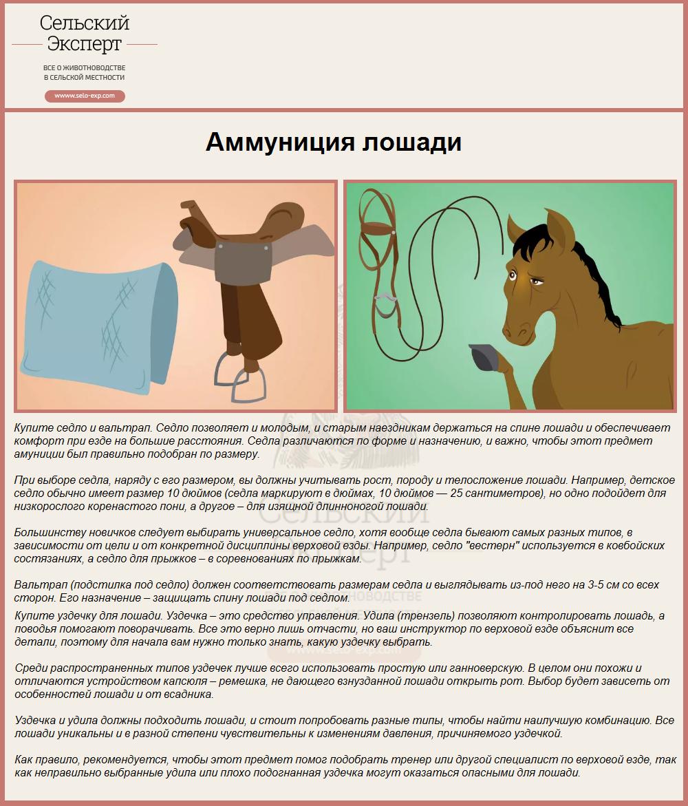 Аммуниция лошади