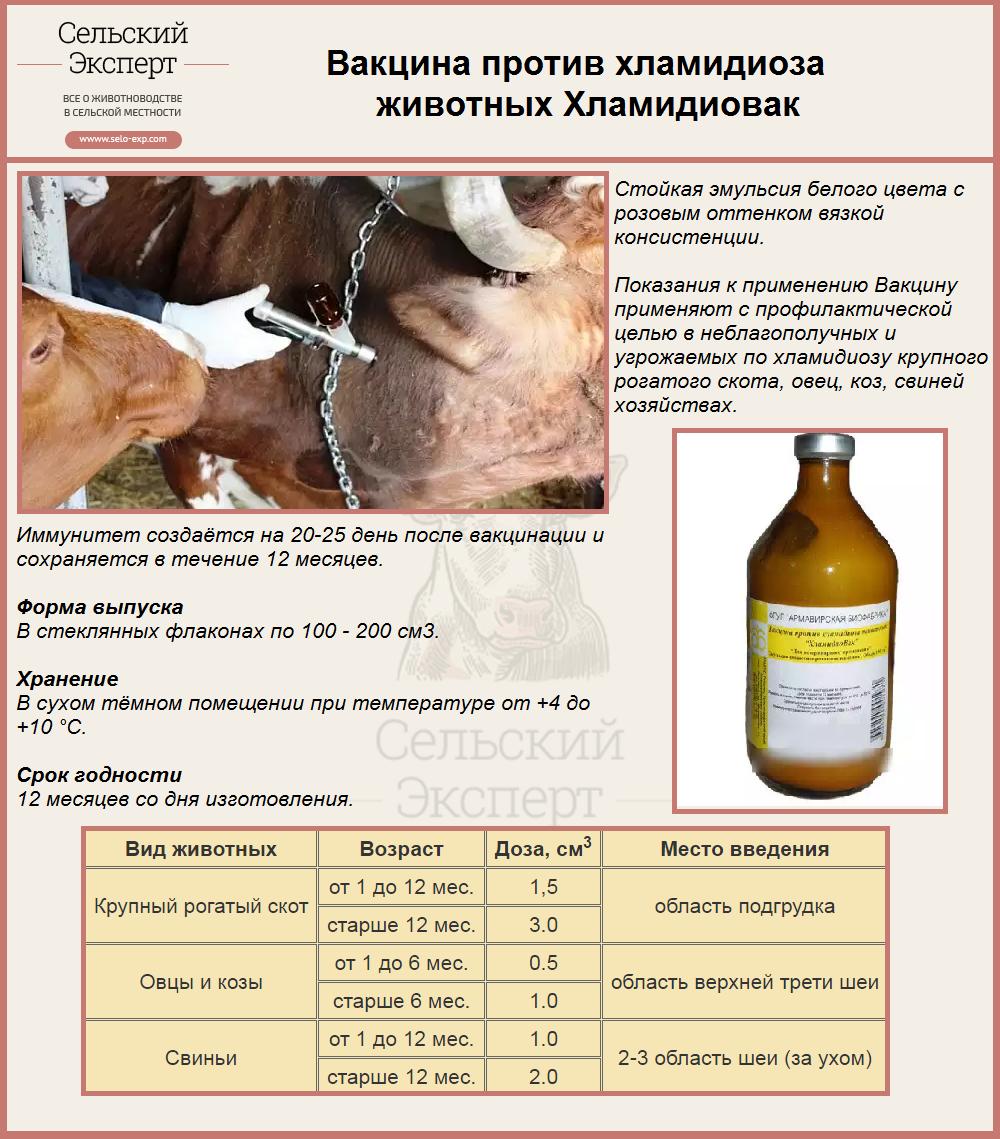 Вакцина против хламидиоза животных Хламидиовак