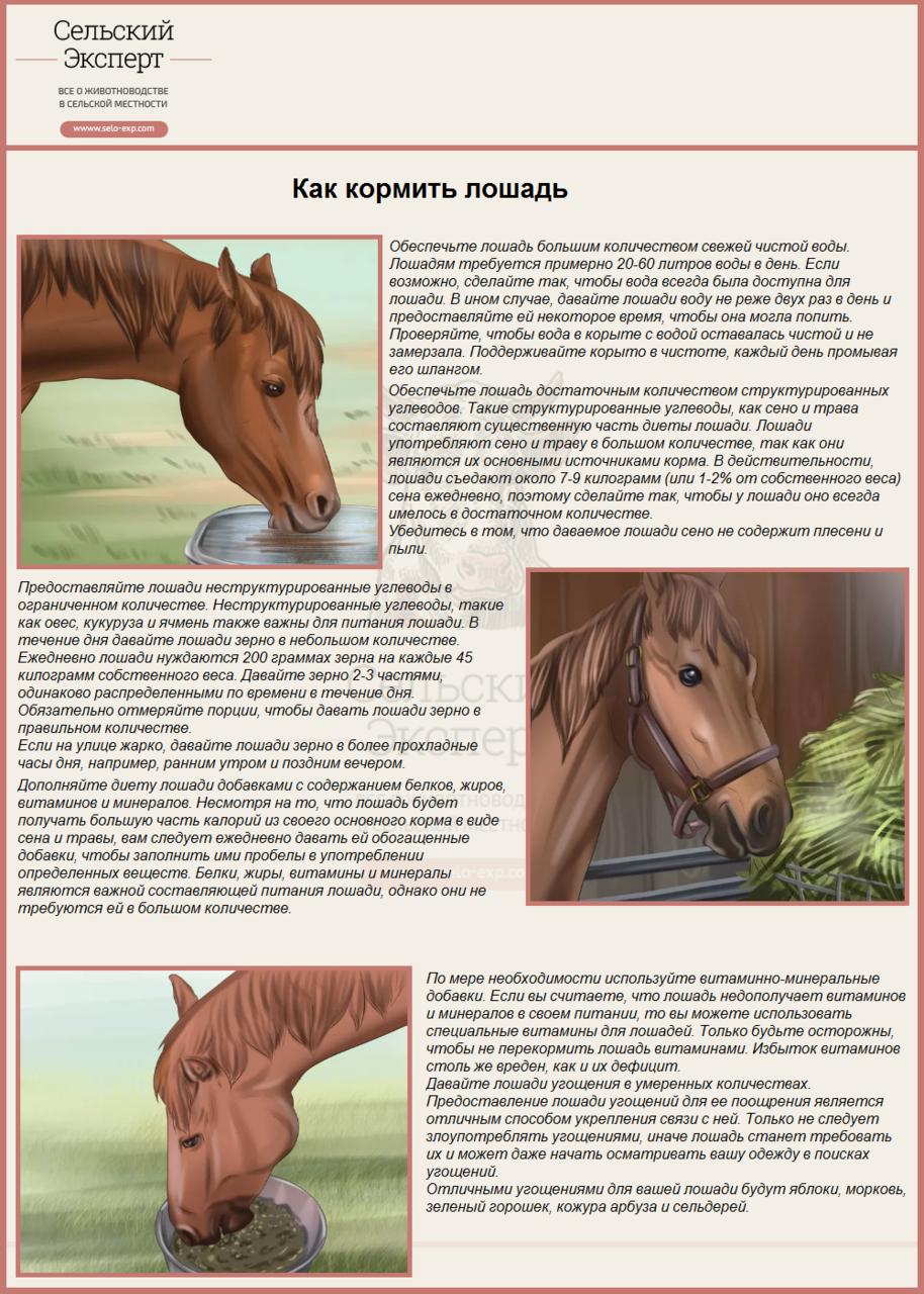 Как кормить лошадь