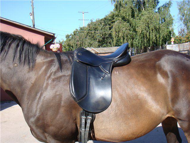 Подпруги фиксируют седло на спине лошади