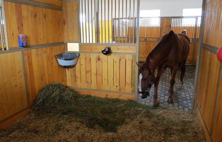 После кормления лошади нужно дать немного отдохнуть