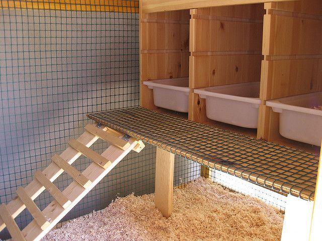 Пример идеального гнезда для индеек