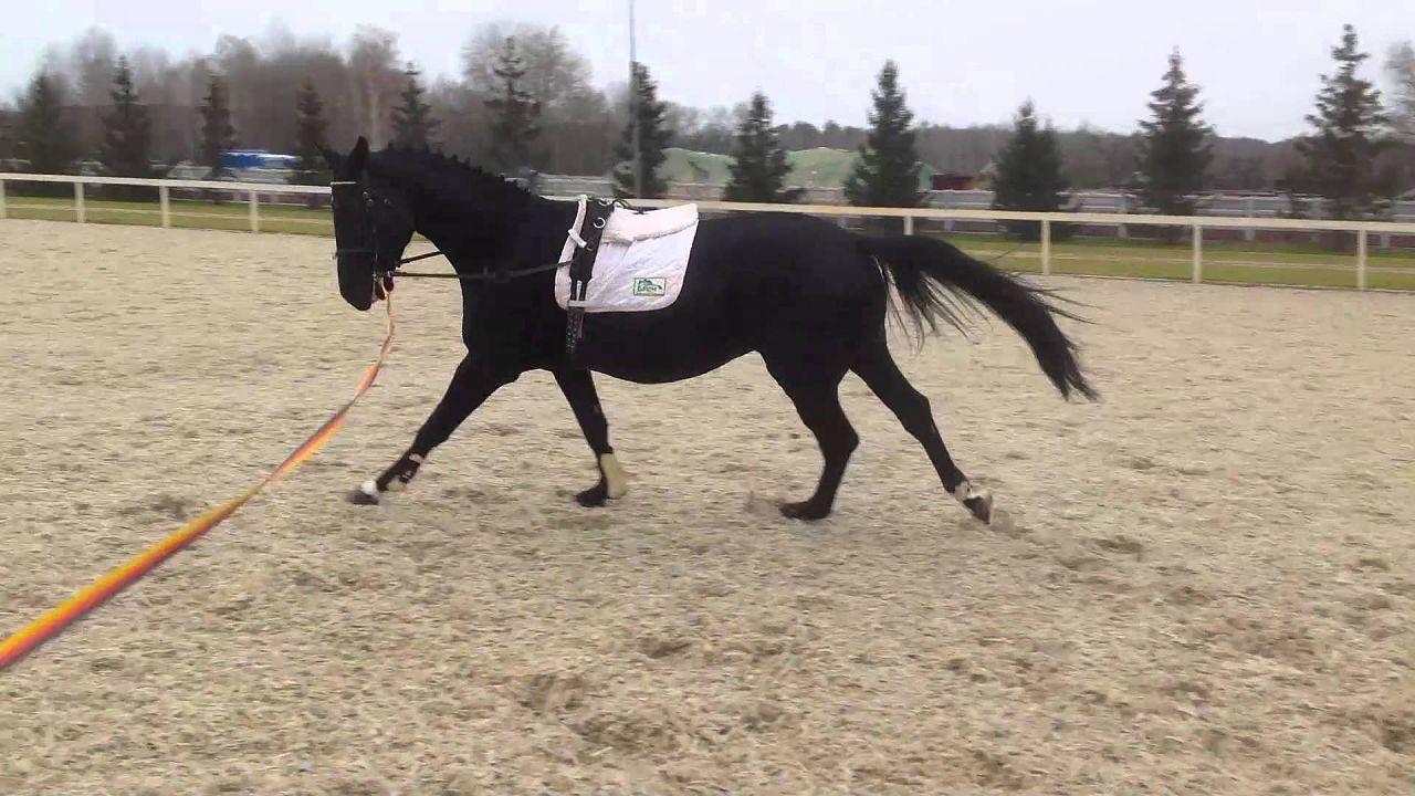 Проводка лошади