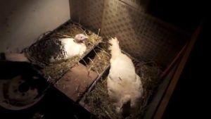 Простейшим гнездом может стать обычный ящик