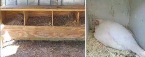 Простое и удобное гнездо для четырех несушек