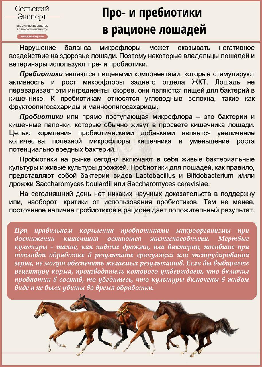 Про- и пребиотики в рационе лошадей