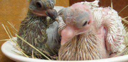 Птенцы в круглом гнезде