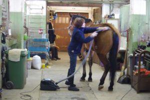 Пылесос для лошади