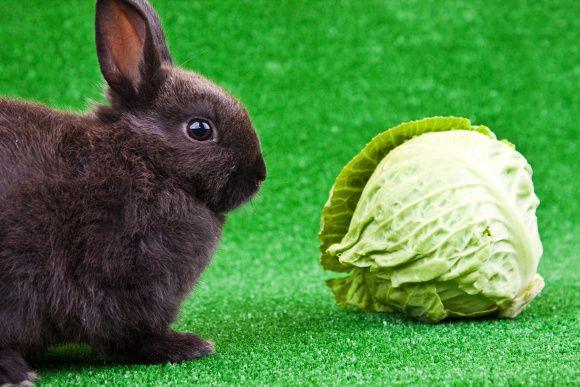 Кролики любят не только свежие овощи, но и приготовленный из них силос