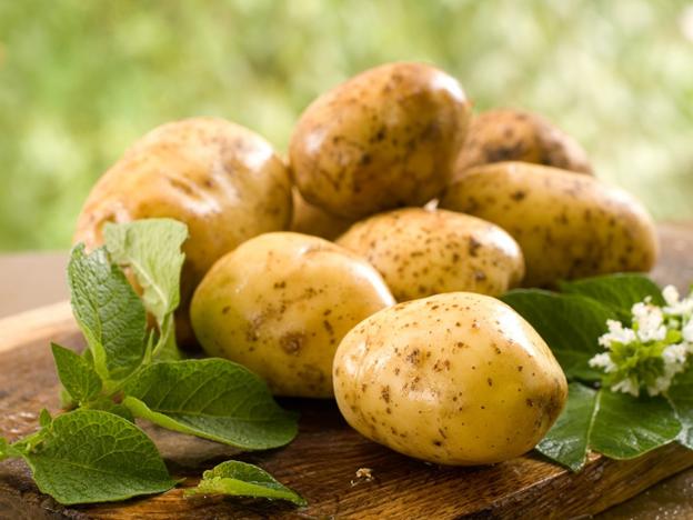 Картофель удешевляет себестоимость кроличьего рациона