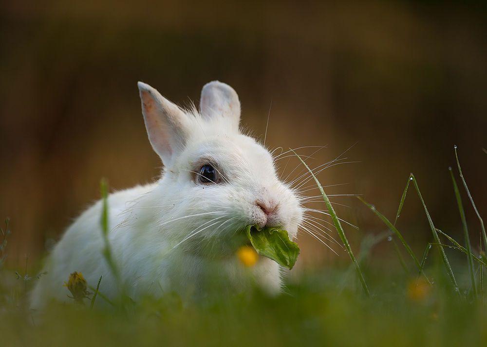 Кроли с удовольствием поедают ботву клубнеплодов и корнеплодов