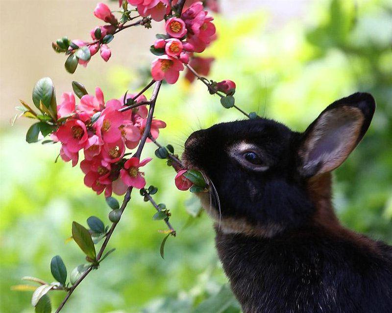 В пищу кролика идут не только листья и цветы растения, но и его ветки