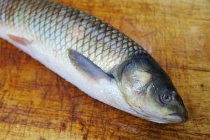 Рыба (форель, треска, скумбрия, камбала)