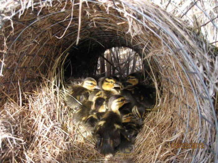 Самодельное гнездо из сетки и соломы