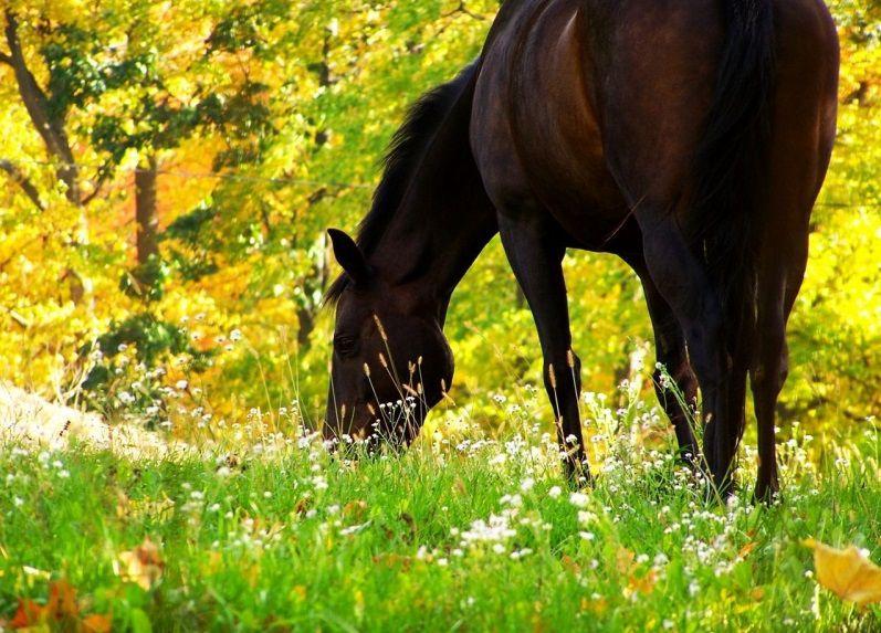 Свежая трава - лучший выбор корма для лошади