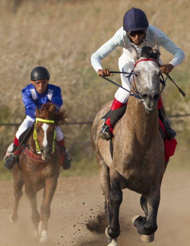 Скачки на арабских лошадях