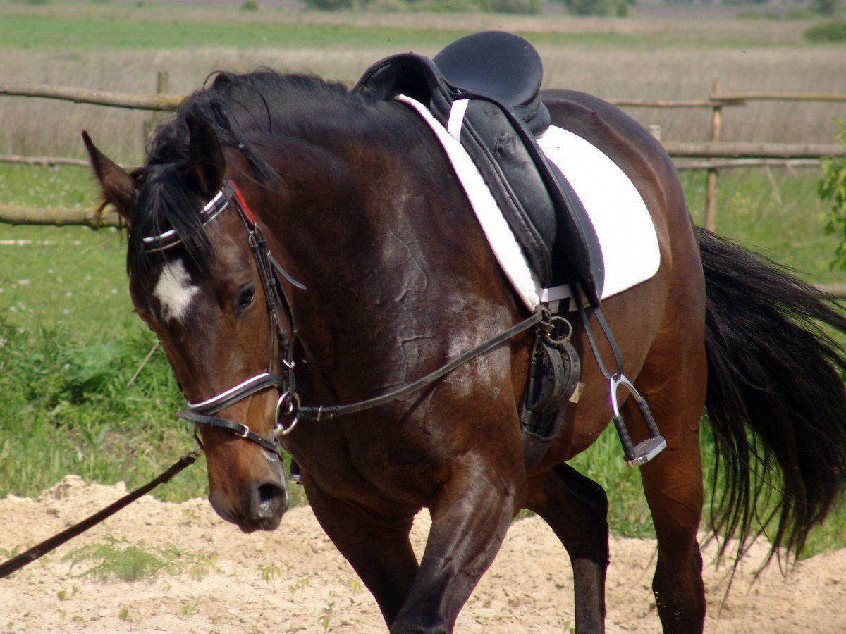 Уздечка для лошади своими руками фото 679