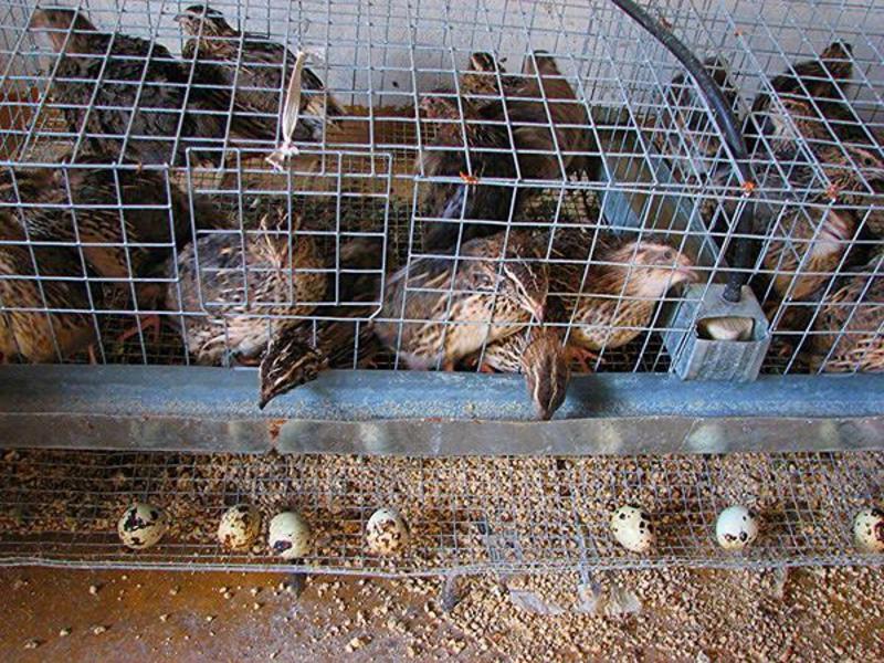 Содержание птиц в клетках