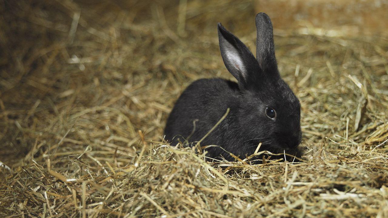 Декоративные кролики неохотно едят солому